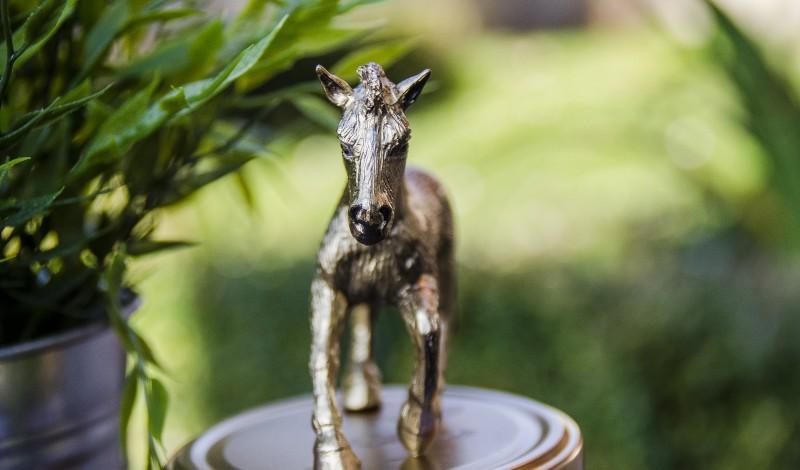 DIY Animal Mason Jars + Exciting News!